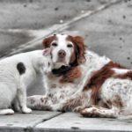 Pet-Friendly Apartment Décor Hacks for the Boulder Animal Lover